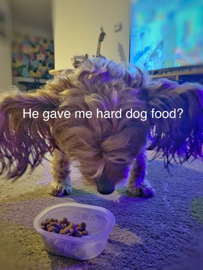 dog with dinner