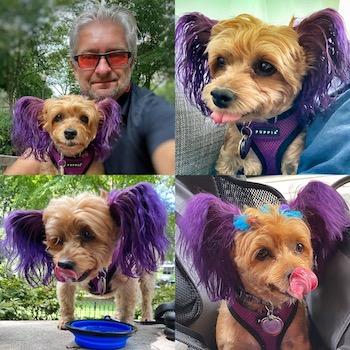 puppy MacyJane
