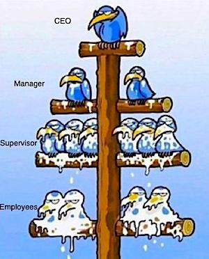 Bird Org Chart
