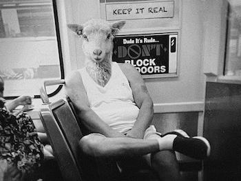 Sheep man on bus