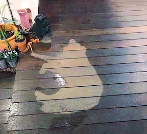 dog outline on porch