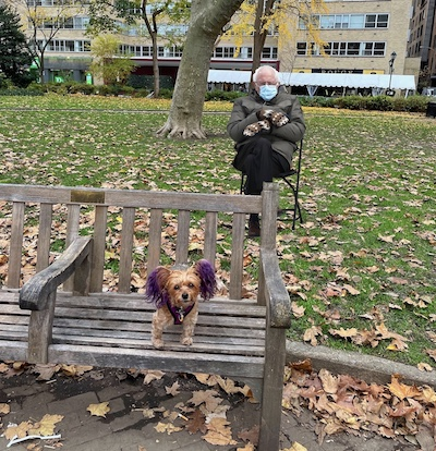 Dog and Bernie in park