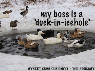 duck in ice hole