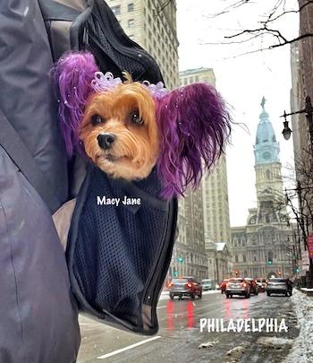 puppy Macy Jane in philadelphia