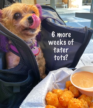 Puppy macy Jane loves her tater tots
