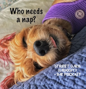 puppy loves to sleep and we did a podcast about sleep