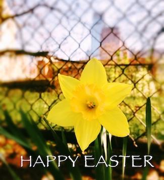 Easter Flower in Philadelphia