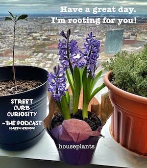 Street Curb curiosity Podcast on house plants