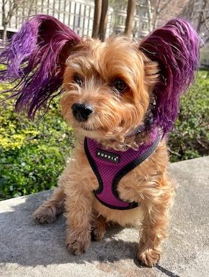 Puppy Macy Jane on a sunny day in Philadelphia