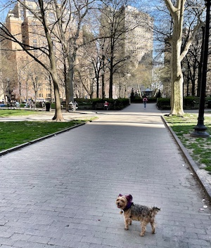 Dog in Rittenhouse Square in Philadelphia
