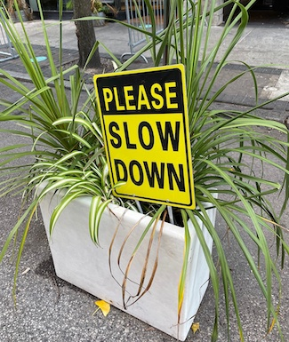 slow down and help someone