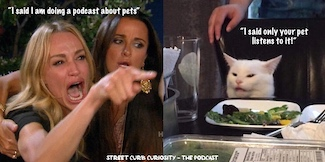 famous cat meme used to promote a podcast about dogs