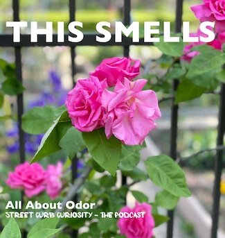 Rose bush with text for podcast promo about odor