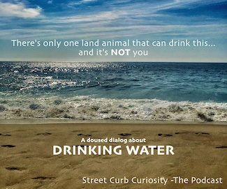 Beach view of the ocean with question about what animal can drink seawater in podcast