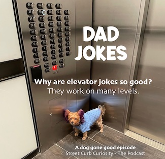photo of dog on elevator with pun about elevator rides to promote a podcast from Street Curb Curiosity