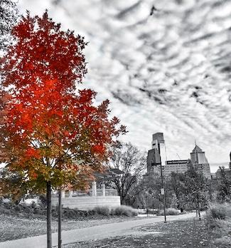 Fall leaves change in Philadelphia