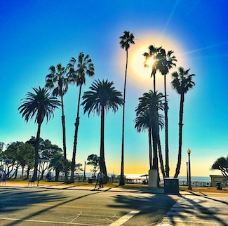 sunshine at a beach with palm trees