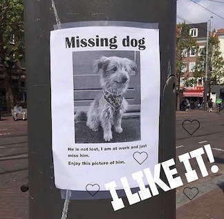 poster of missing dog where the owner tries to make someone smile
